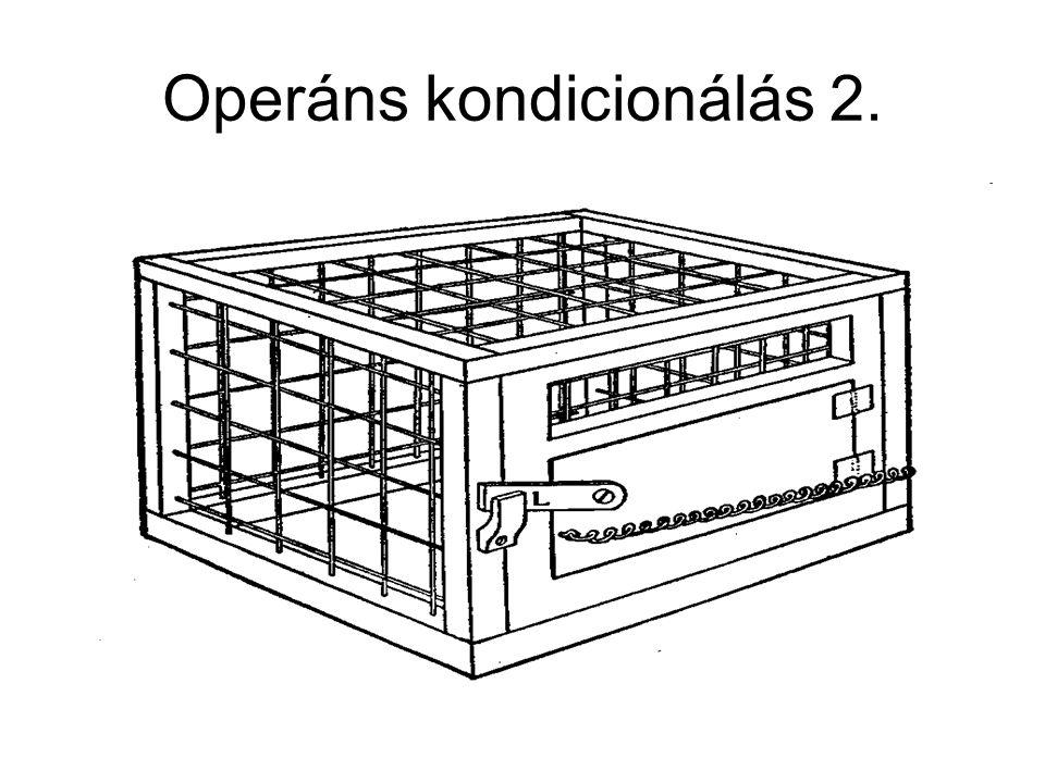 Operáns kondicionálás 2.