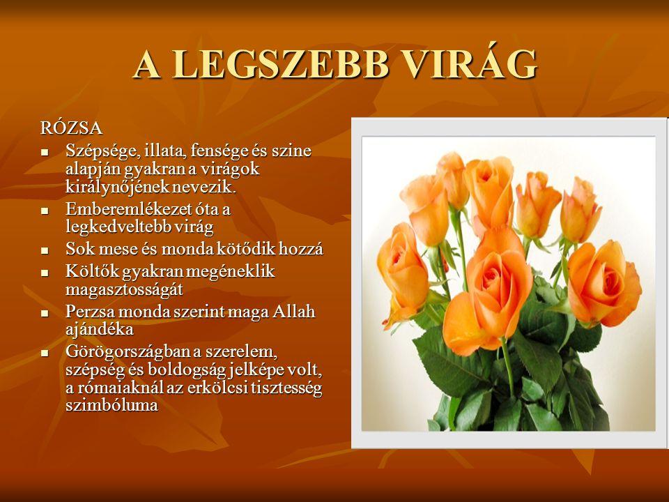 A LEGSZEBB VIRÁG RÓZSA. Szépsége, illata, fensége és szine alapján gyakran a virágok királynőjének nevezik.