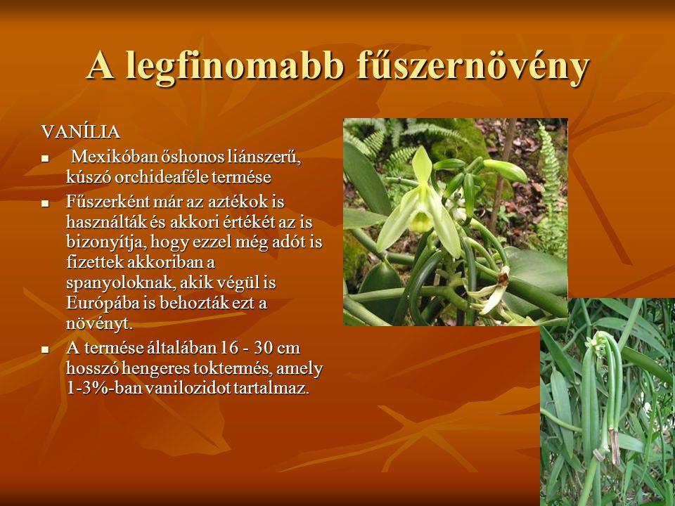 A legfinomabb fűszernövény