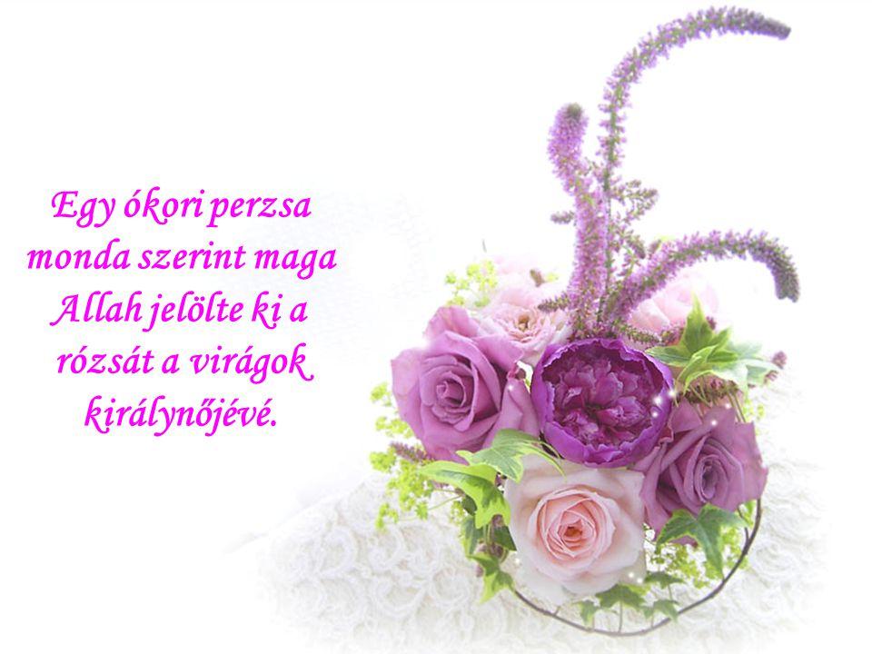 Egy ókori perzsa monda szerint maga Allah jelölte ki a rózsát a virágok királynőjévé.