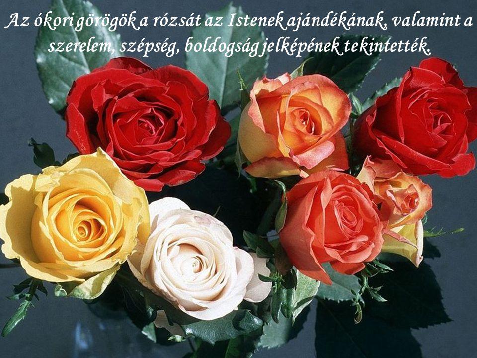 Az ókori görögök a rózsát az Istenek ajándékának, valamint a szerelem, szépség, boldogság jelképének tekintették.