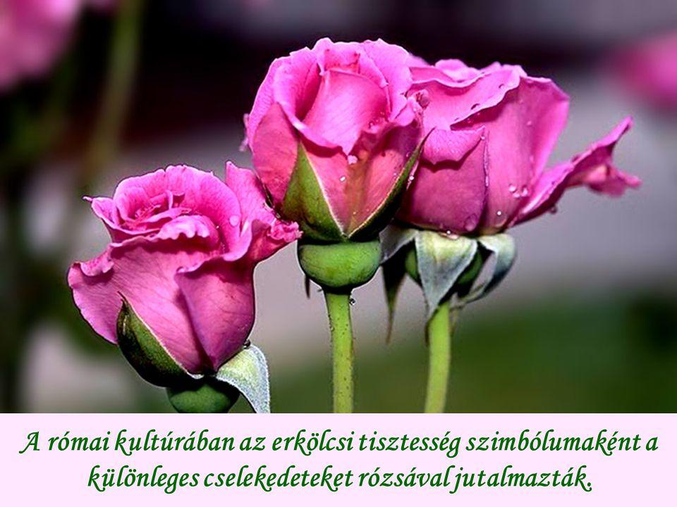 A római kultúrában az erkölcsi tisztesség szimbólumaként a különleges cselekedeteket rózsával jutalmazták.