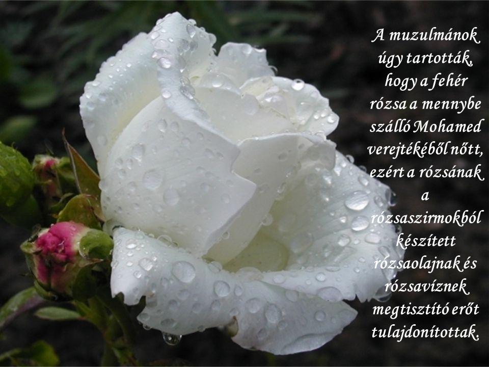 A muzulmánok úgy tartották, hogy a fehér rózsa a mennybe szálló Mohamed verejtékéből nőtt, ezért a rózsának a rózsaszirmokból készített rózsaolajnak és rózsavíznek megtisztító erőt tulajdonítottak.