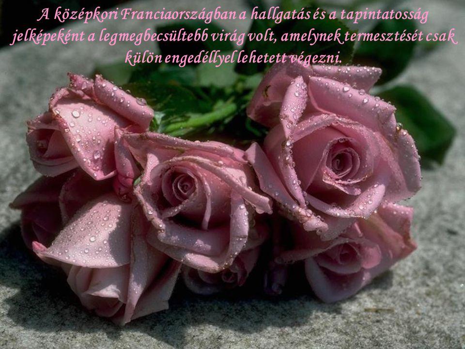 A középkori Franciaországban a hallgatás és a tapintatosság jelképeként a legmegbecsültebb virág volt, amelynek termesztését csak külön engedéllyel lehetett végezni.