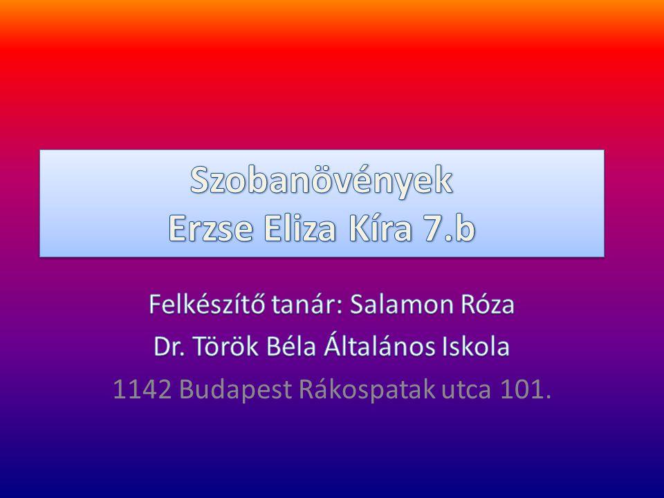 Szobanövények Erzse Eliza Kíra 7.b