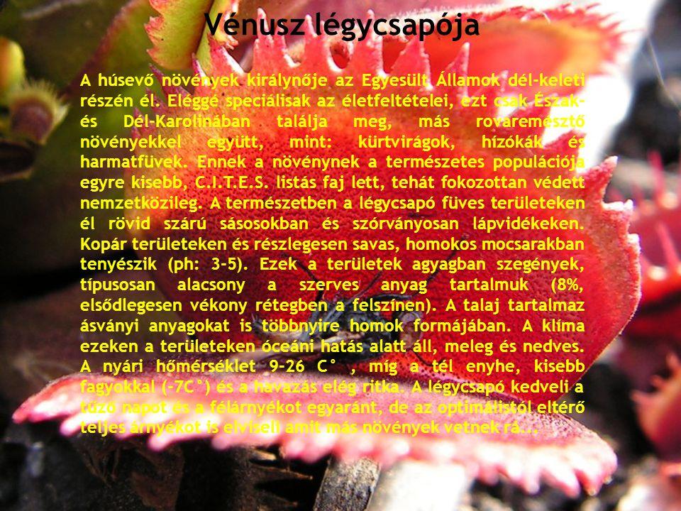 Vénusz légycsapója