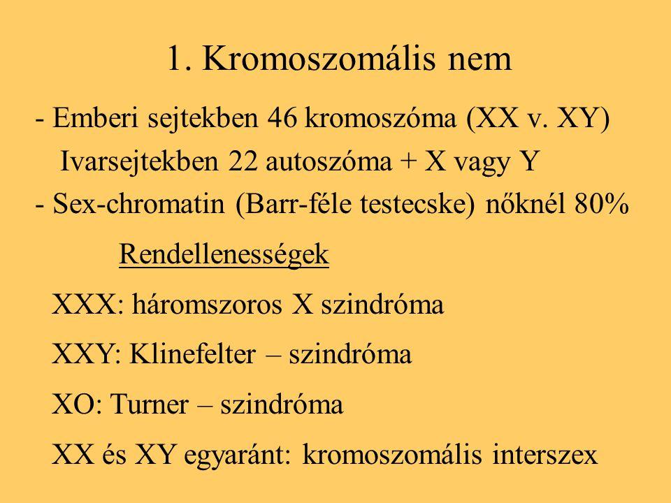 1. Kromoszomális nem - Emberi sejtekben 46 kromoszóma (XX v. XY)