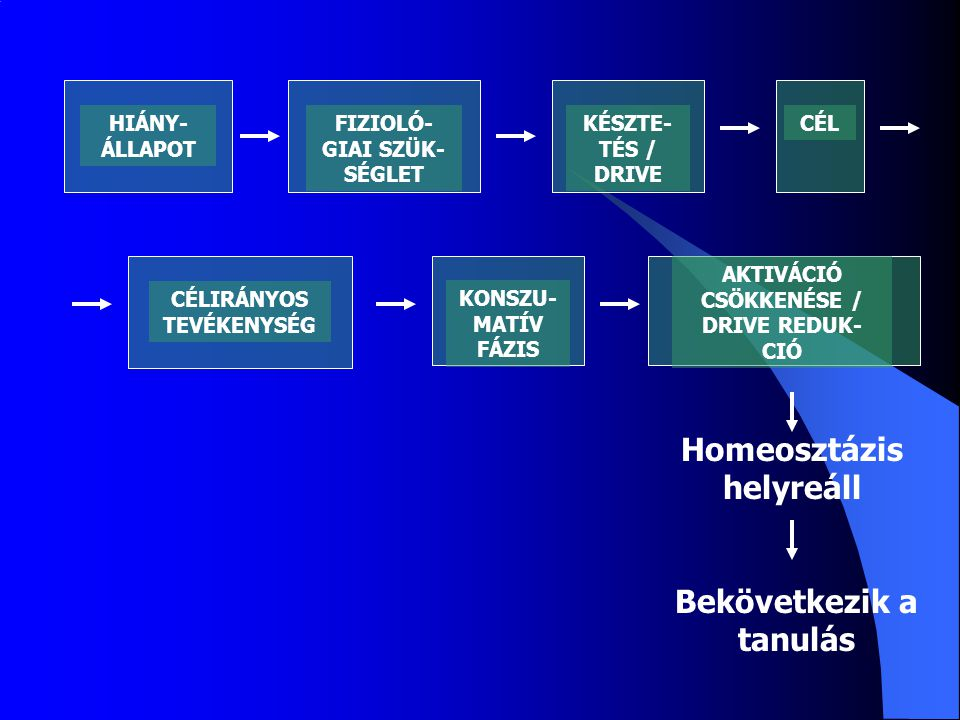 Homeosztázis helyreáll Bekövetkezik a tanulás