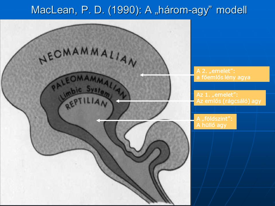 "MacLean, P. D. (1990): A ""három-agy modell"