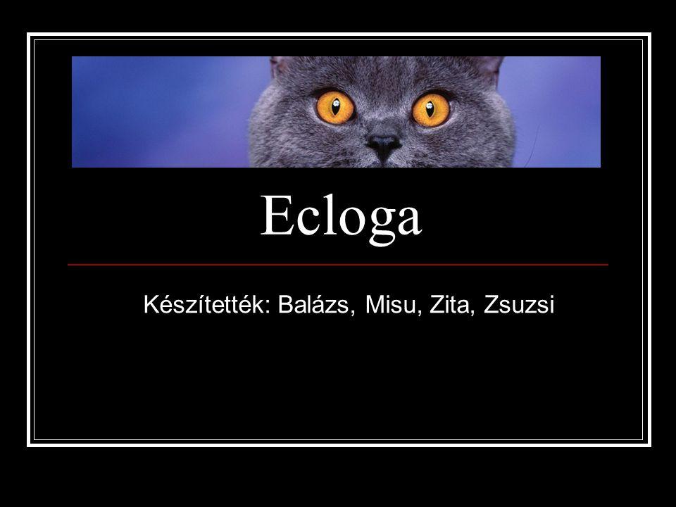Készítették: Balázs, Misu, Zita, Zsuzsi
