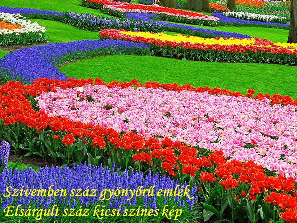 Szívemben száz gyönyőrű emlék Elsárgult száz kicsi színes kép