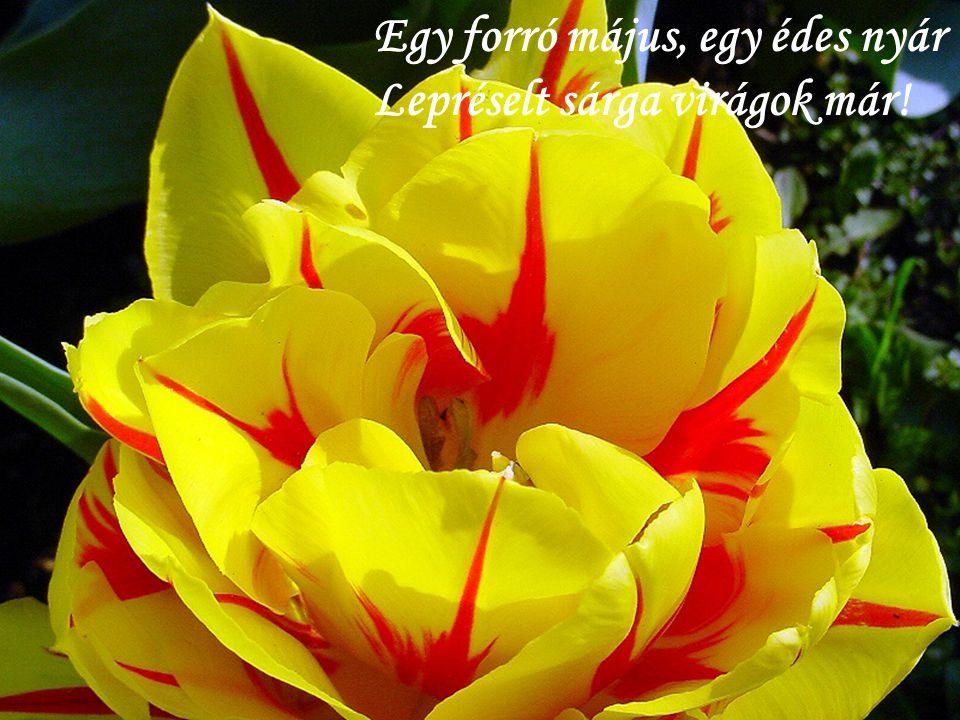 Egy forró május, egy édes nyár Lepréselt sárga virágok már!