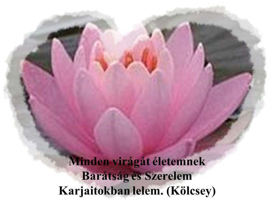 Minden virágát életemnek Barátság és Szerelem Karjaitokban lelem