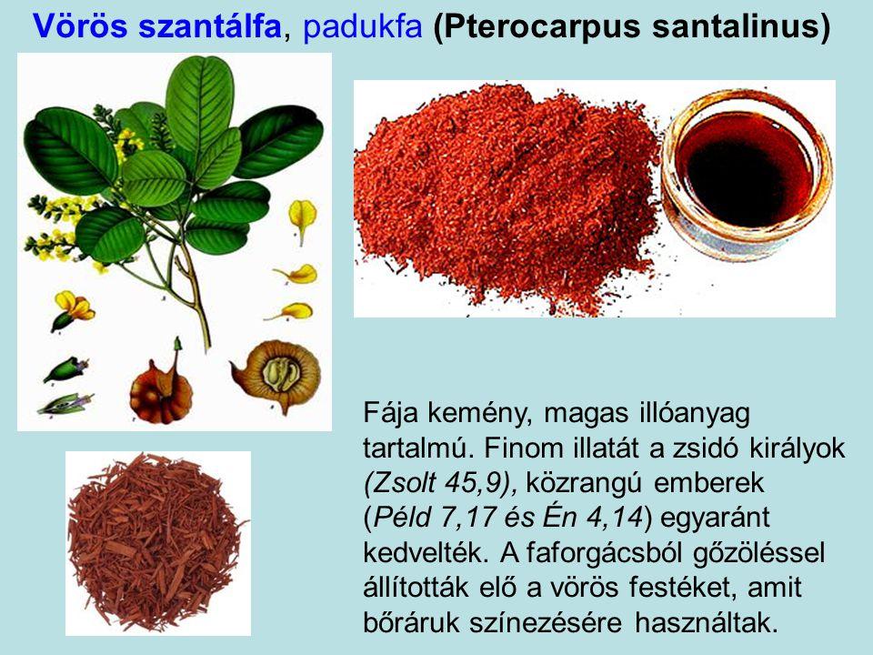 Vörös szantálfa, padukfa (Pterocarpus santalinus)