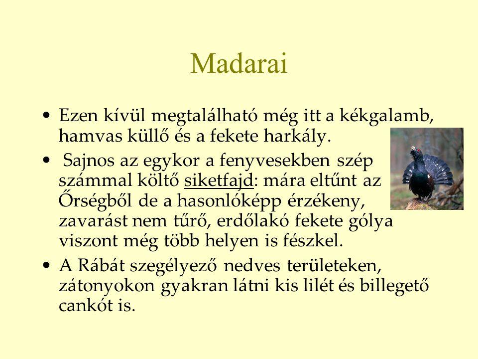 Madarai Ezen kívül megtalálható még itt a kékgalamb, hamvas küllő és a fekete harkály.