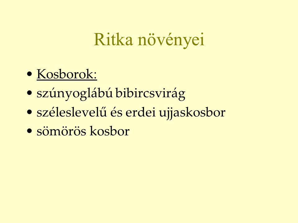Ritka növényei Kosborok: szúnyoglábú bibircsvirág