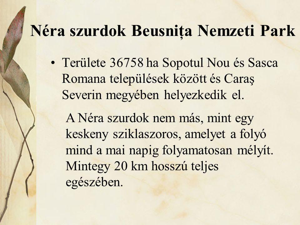 Néra szurdok Beusniţa Nemzeti Park
