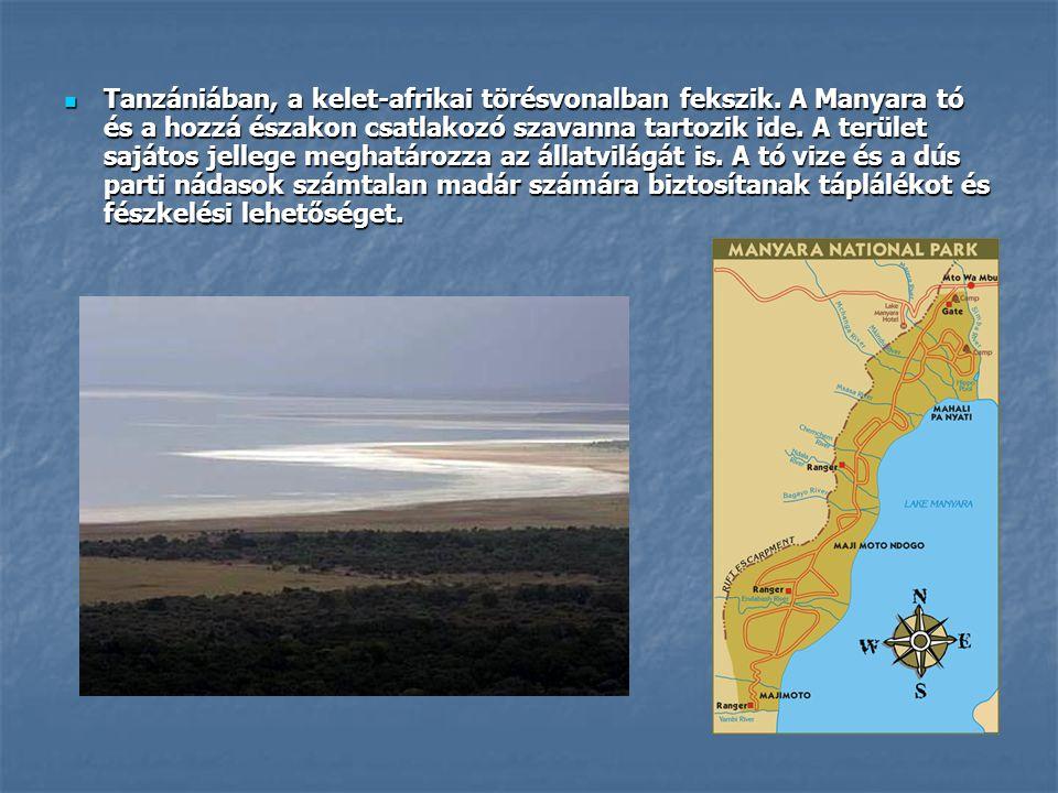 Tanzániában, a kelet-afrikai törésvonalban fekszik