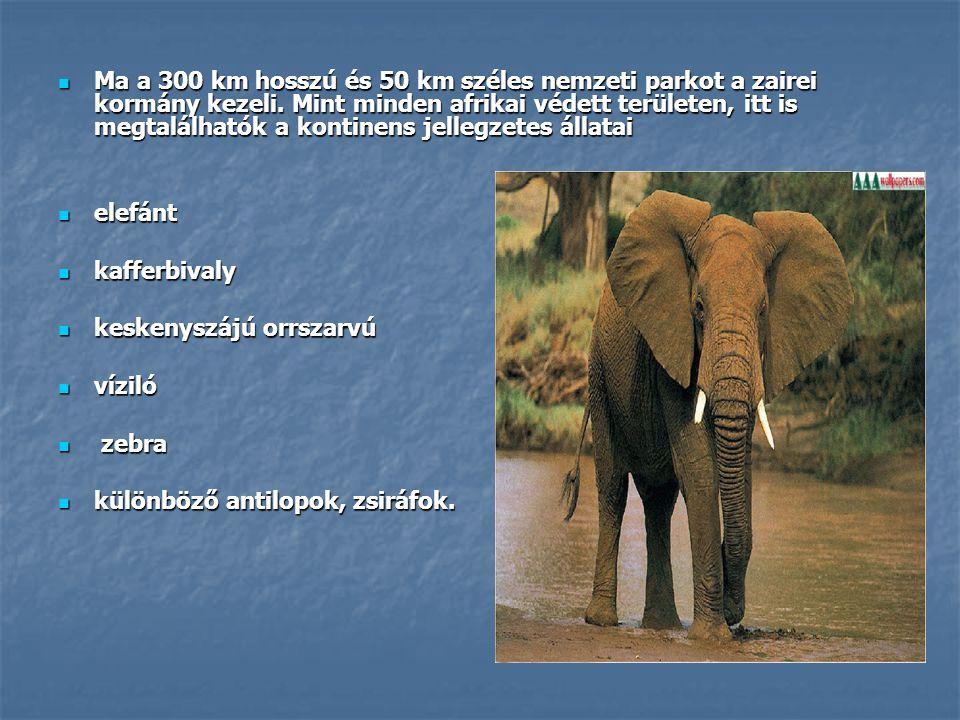 Ma a 300 km hosszú és 50 km széles nemzeti parkot a zairei kormány kezeli. Mint minden afrikai védett területen, itt is megtalálhatók a kontinens jellegzetes állatai