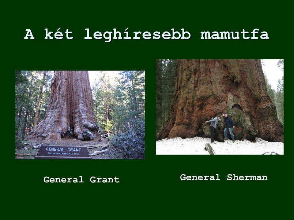 A két leghíresebb mamutfa