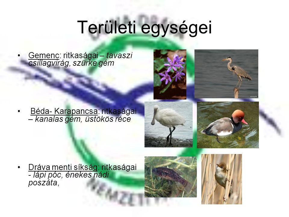 Területi egységei Gemenc: ritkaságai – tavaszi csillagvirág, szürke gém. Béda- Karapancsa: ritkaságai – kanalas gém, üstökös réce.