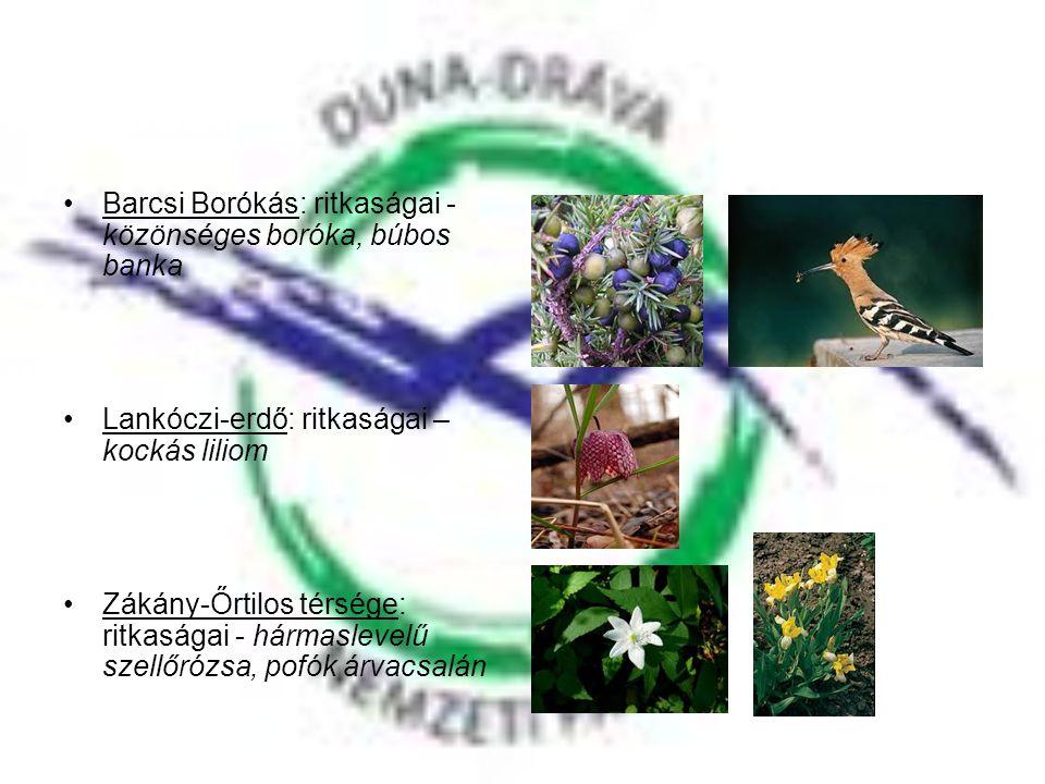 Barcsi Borókás: ritkaságai - közönséges boróka, búbos banka