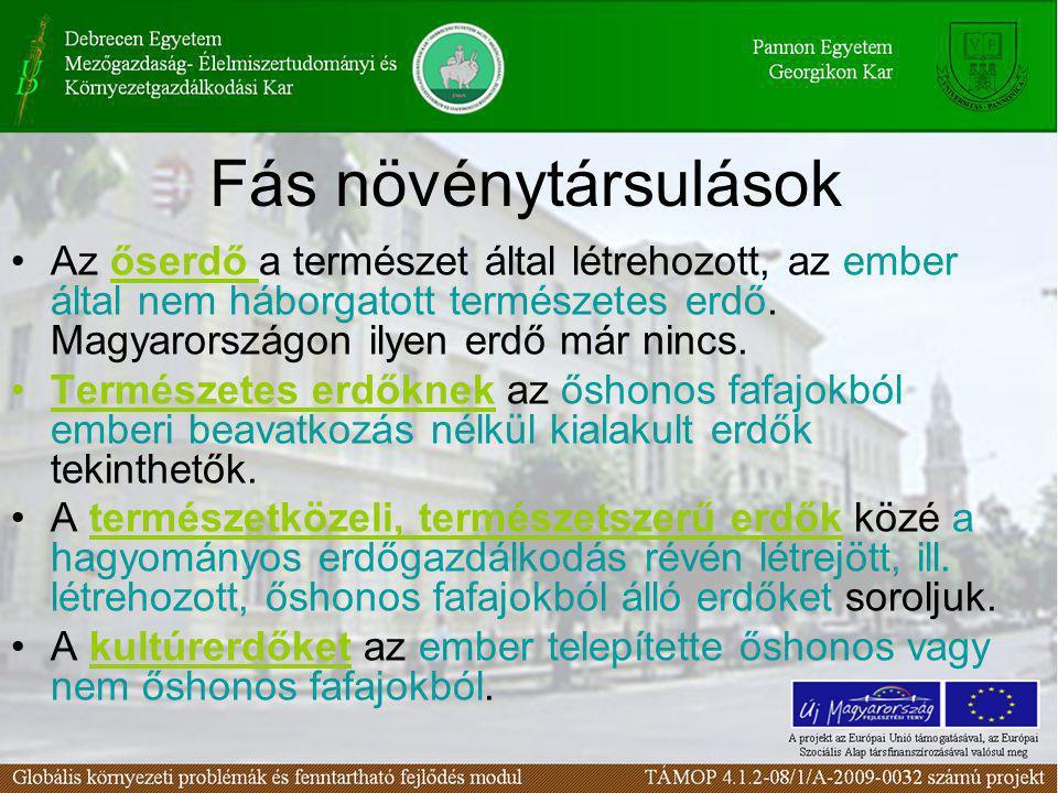 Fás növénytársulások Az őserdő a természet által létrehozott, az ember által nem háborgatott természetes erdő. Magyarországon ilyen erdő már nincs.