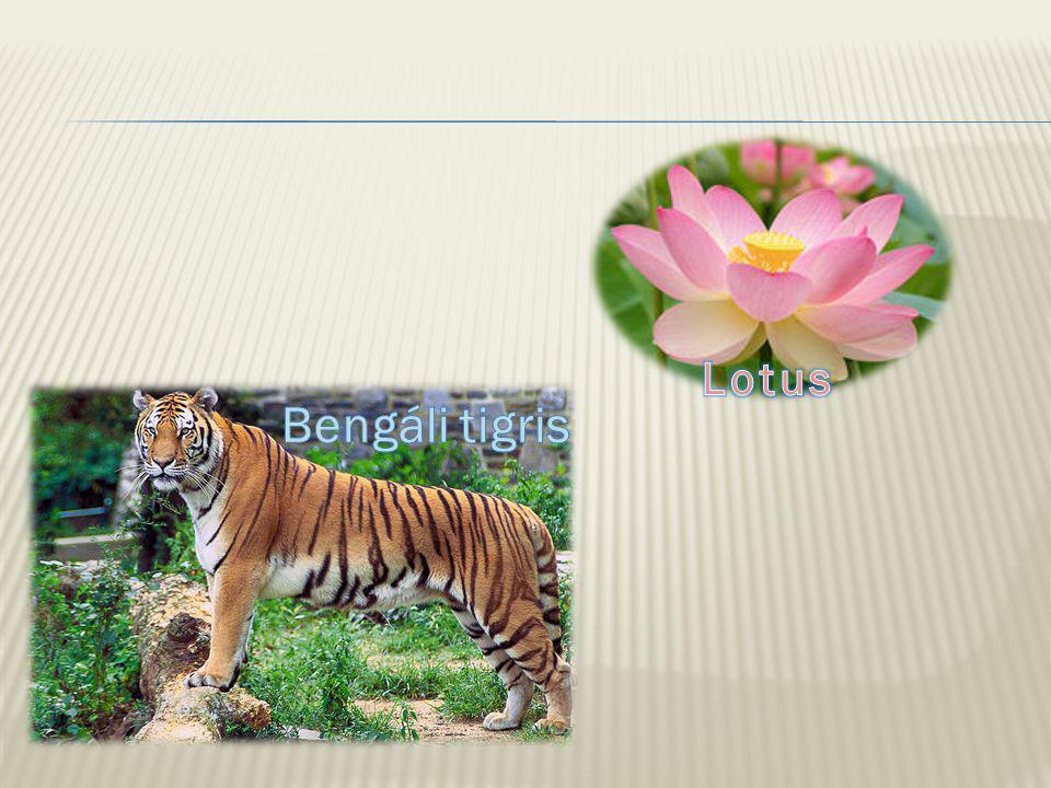 Lotus Bengáli tigris