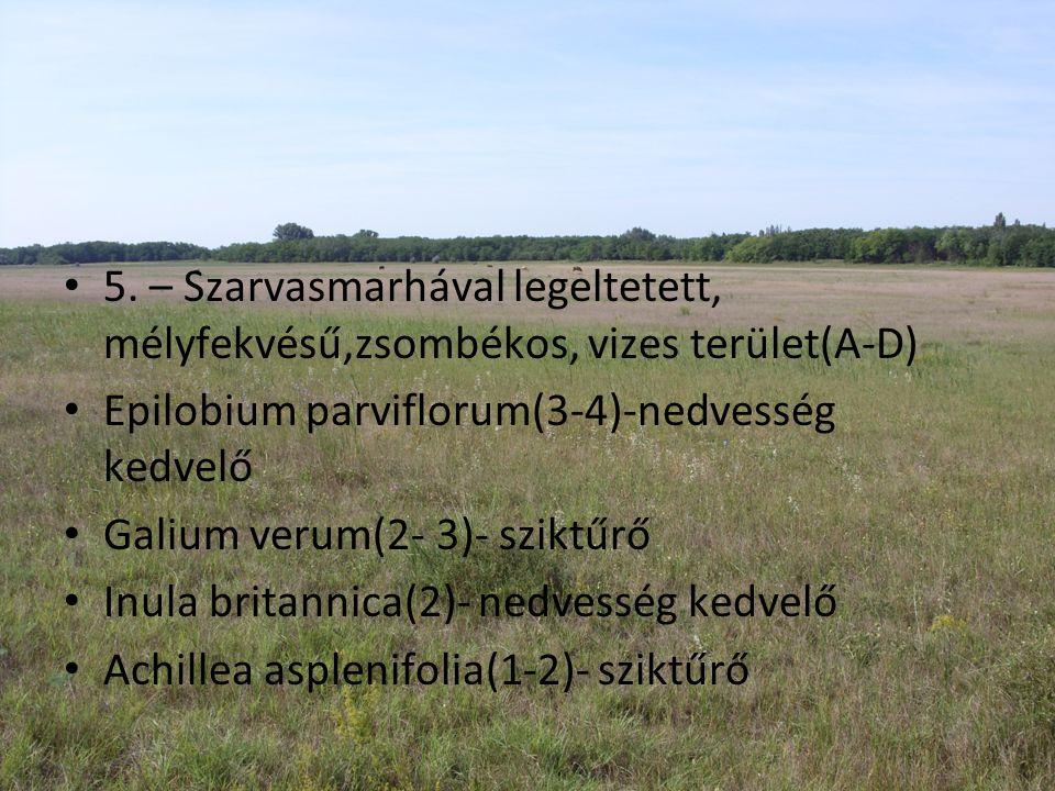 5. – Szarvasmarhával legeltetett, mélyfekvésű,zsombékos, vizes terület(A-D)