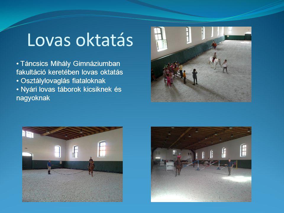 Lovas oktatás Táncsics Mihály Gimnáziumban fakultáció keretében lovas oktatás. Osztálylovaglás fiataloknak.