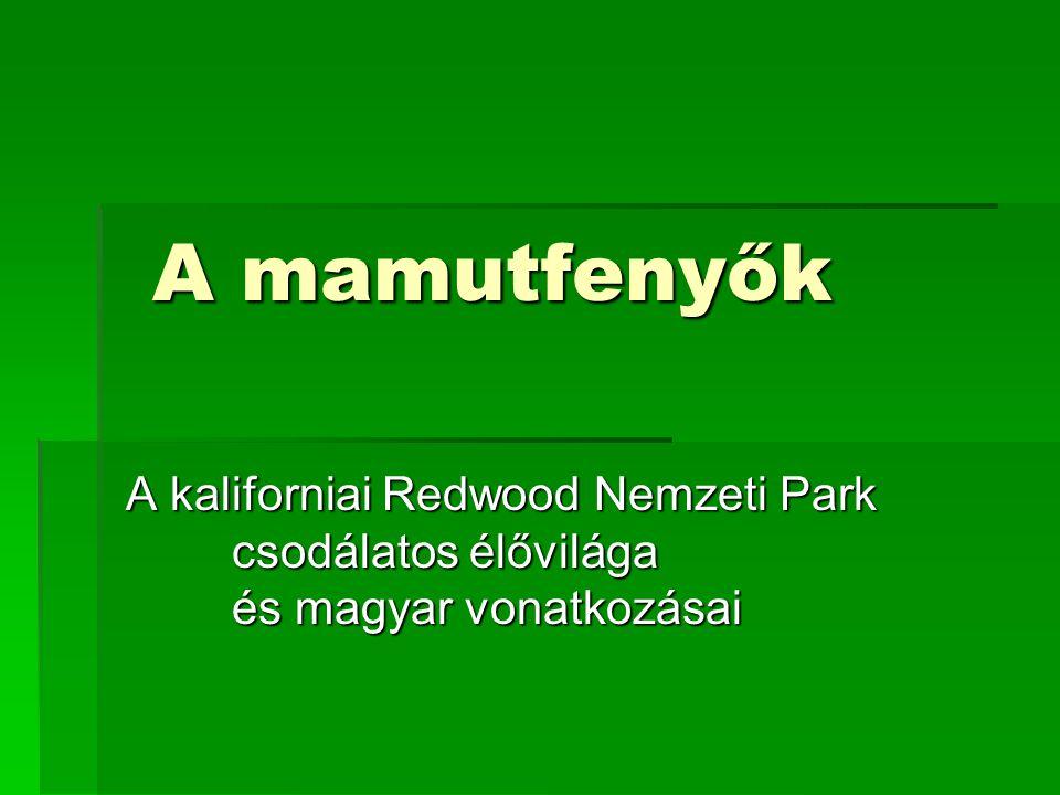 A mamutfenyők A kaliforniai Redwood Nemzeti Park csodálatos élővilága és magyar vonatkozásai