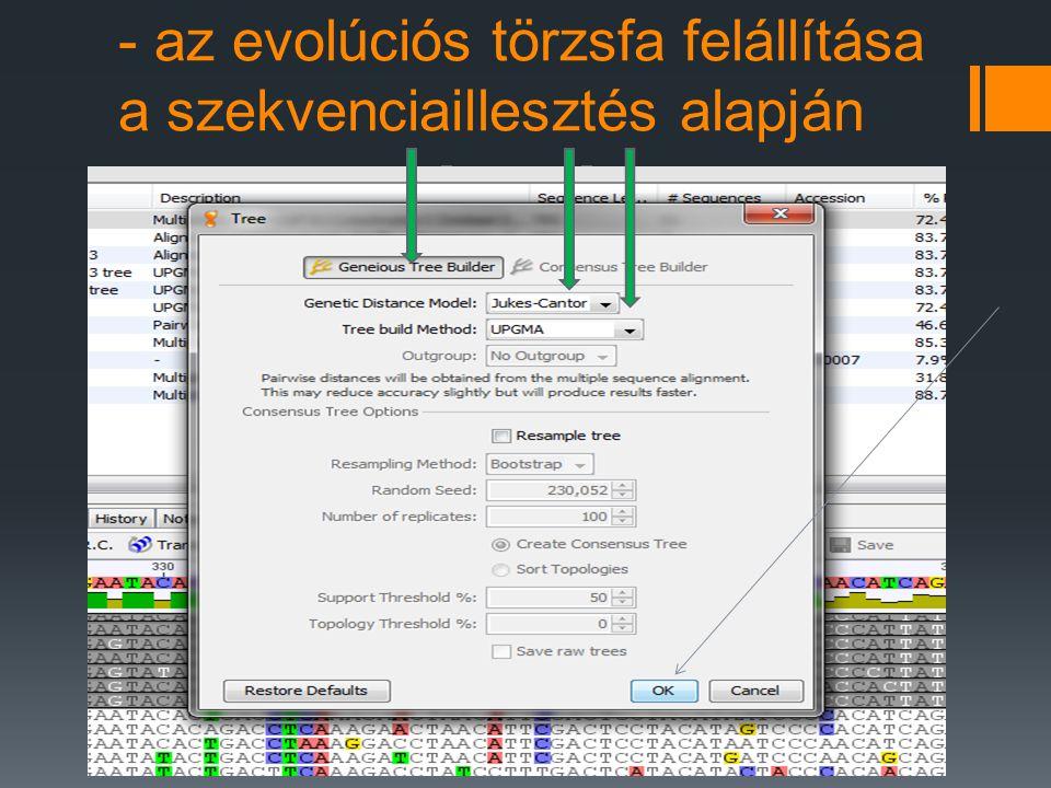 - az evolúciós törzsfa felállítása a szekvenciaillesztés alapján