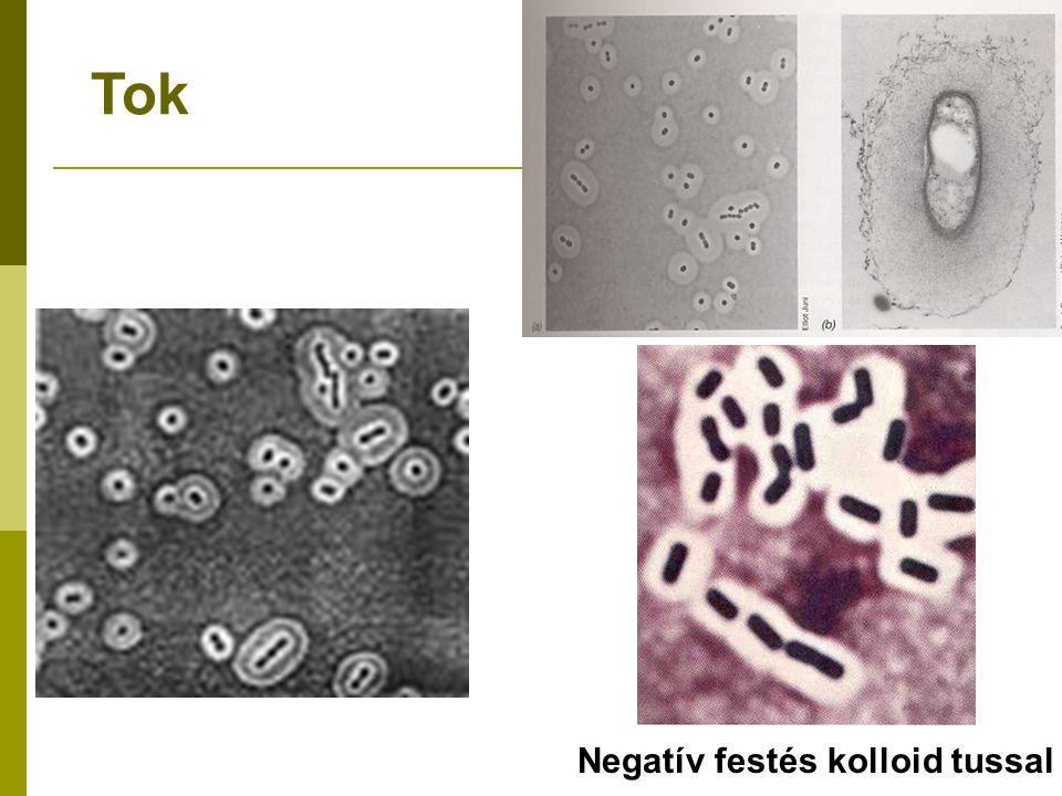 Ent 547: Fundamentals of Biological Control