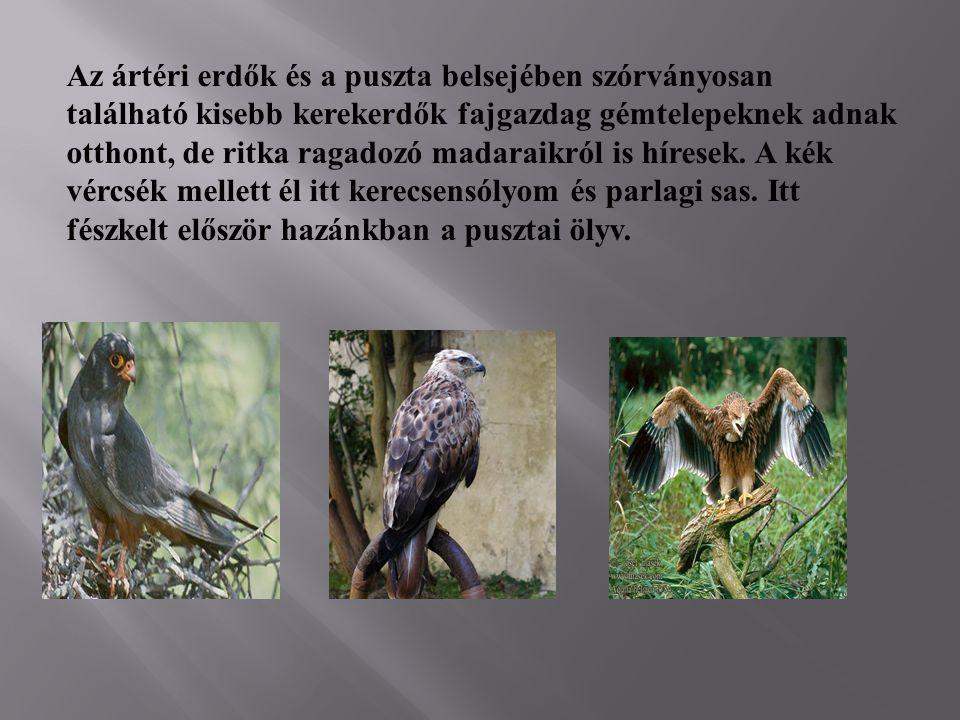 Az ártéri erdők és a puszta belsejében szórványosan található kisebb kerekerdők fajgazdag gémtelepeknek adnak otthont, de ritka ragadozó madaraikról is híresek.