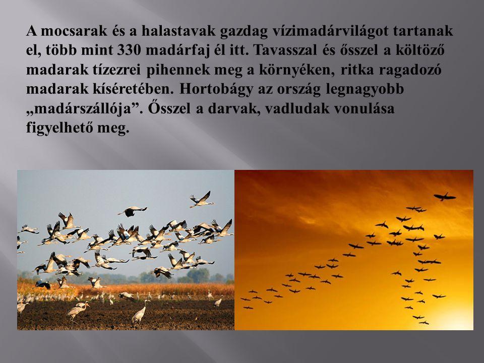 A mocsarak és a halastavak gazdag vízimadárvilágot tartanak el, több mint 330 madárfaj él itt.