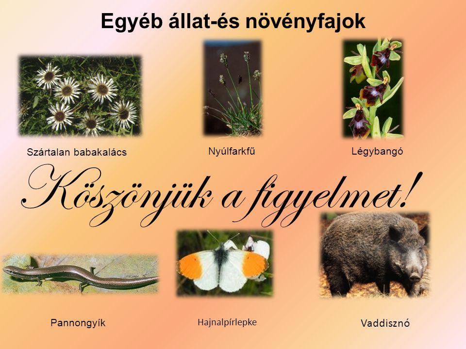 Egyéb állat-és növényfajok