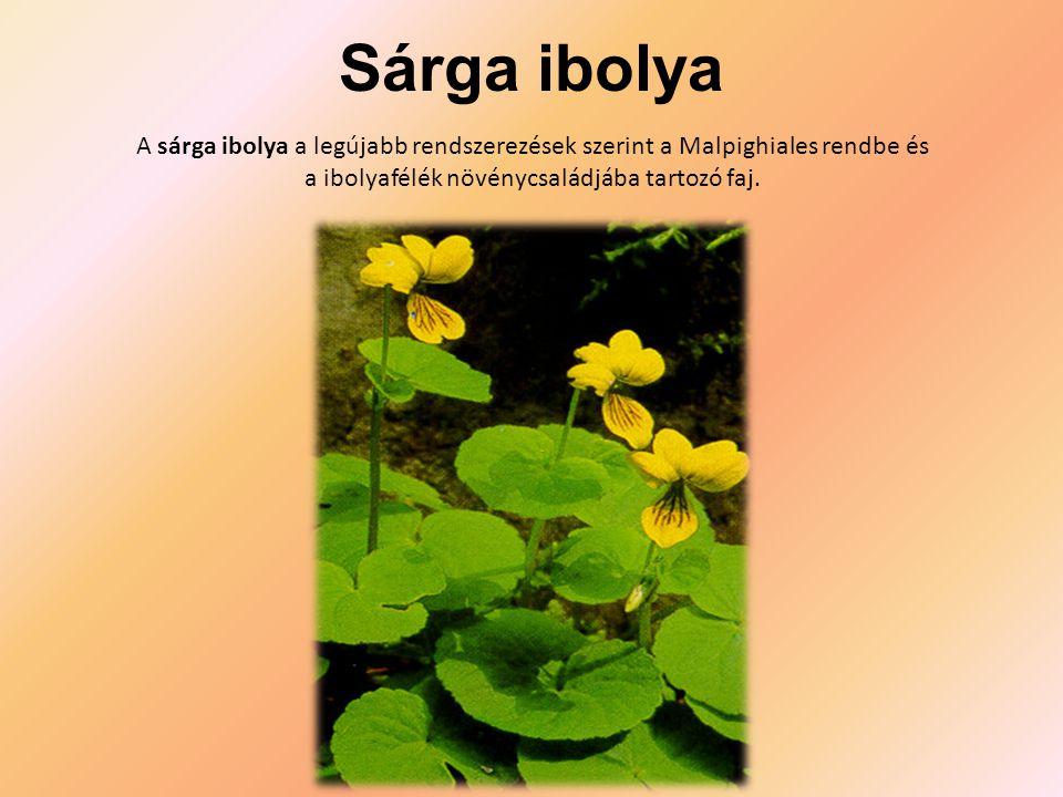 Sárga ibolya A sárga ibolya a legújabb rendszerezések szerint a Malpighiales rendbe és a ibolyafélék növénycsaládjába tartozó faj.