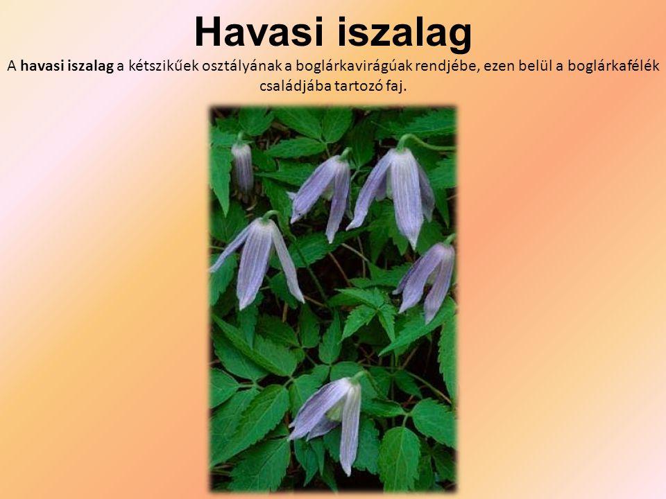 Havasi iszalag A havasi iszalag a kétszikűek osztályának a boglárkavirágúak rendjébe, ezen belül a boglárkafélék családjába tartozó faj.