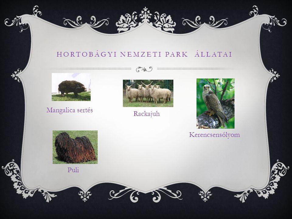 Hortobágyi Nemzeti Park Állatai