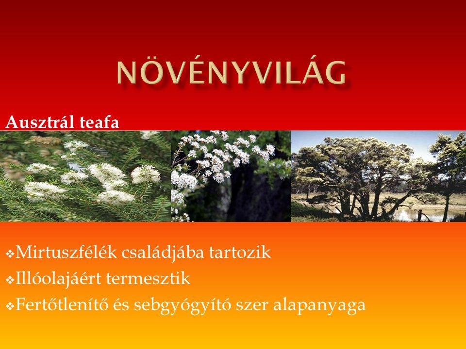 növényvilág Ausztrál teafa Mirtuszfélék családjába tartozik