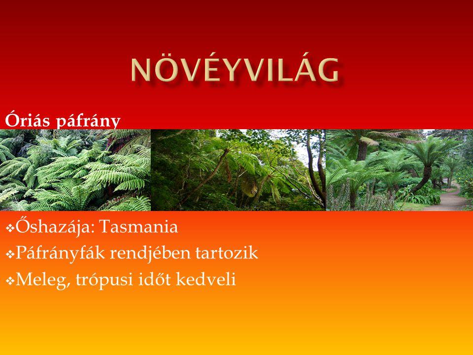 növéyvilág Óriás páfrány Őshazája: Tasmania