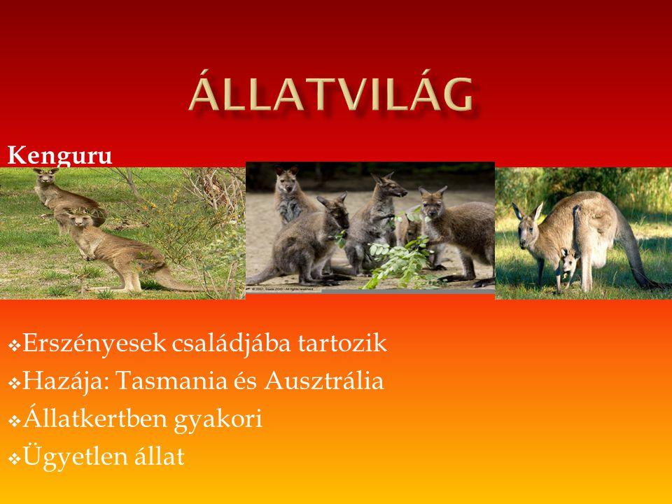 állatvilág Kenguru Erszényesek családjába tartozik
