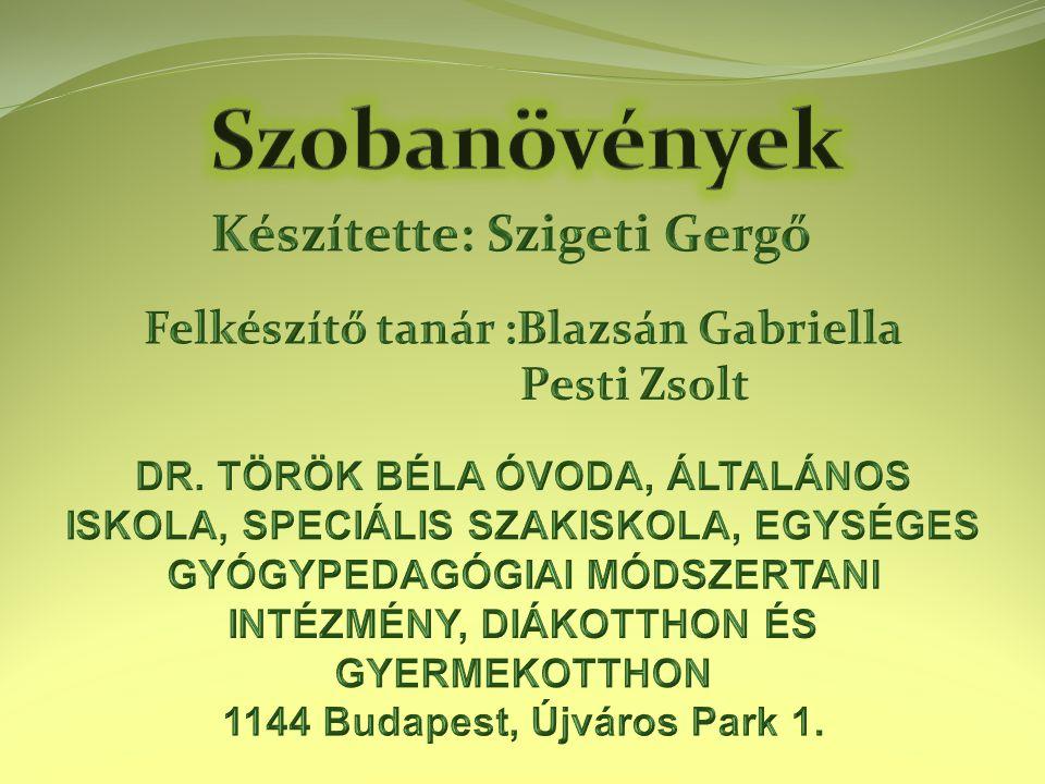 Készítette: Szigeti Gergő Felkészítő tanár :Blazsán Gabriella