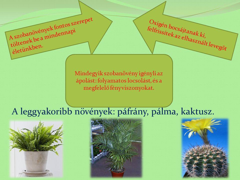A leggyakoribb növények: páfrány, pálma, kaktusz.