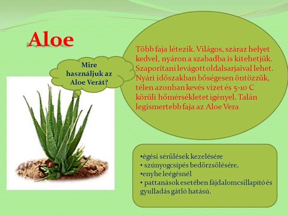 Mire használjuk az Aloe Verát