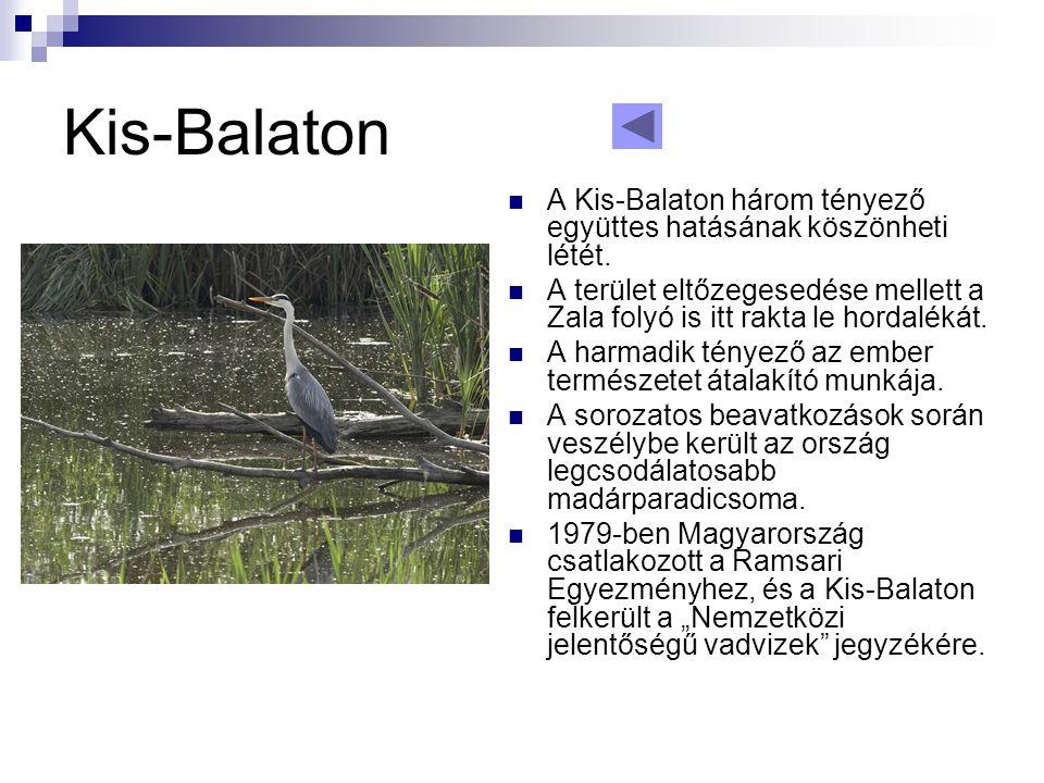 Kis-Balaton A Kis-Balaton három tényező együttes hatásának köszönheti létét.