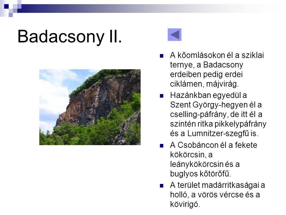Badacsony II. A kőomlásokon él a sziklai ternye, a Badacsony erdeiben pedig erdei ciklámen, májvirág.