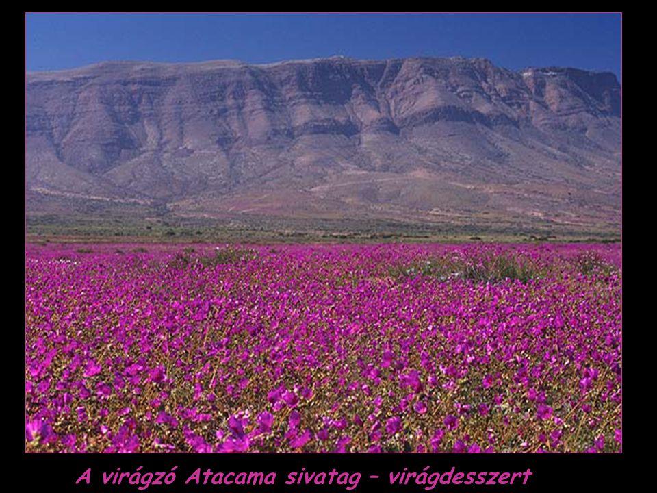 A virágzó Atacama sivatag – virágdesszert