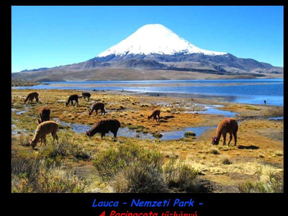 Lauca – Nemzeti Park - A Parinacota tűzhányó