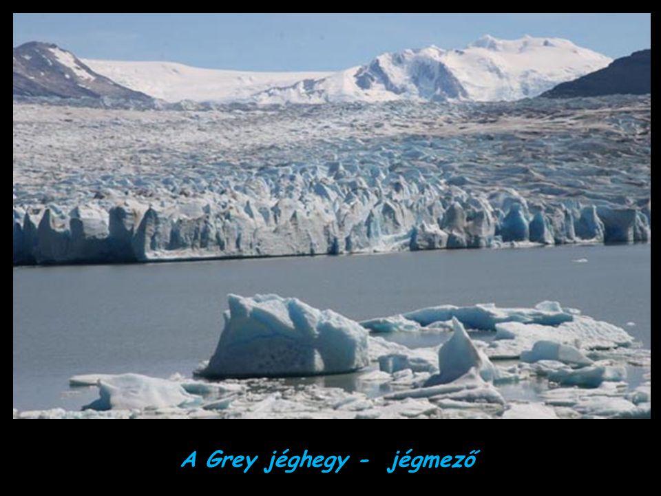 A Grey jéghegy - jégmező
